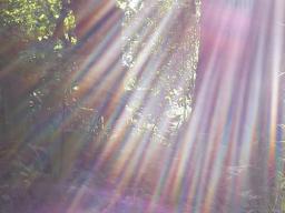Webinar: Heilung für Mutter Erde und für Dich