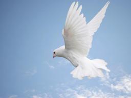 Webinar: SCHAMANISCHE REISE ZUR SELBSTLIEBE