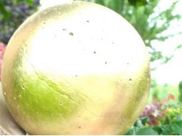 Webinar: Yowea® Deeksha - göttliches Samenkorn Einweihung