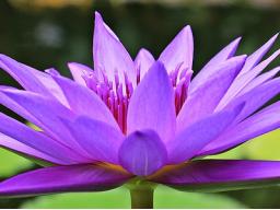 Webinar: Spirituelle/ hellsichtige Beratung zu Lebensfragen
