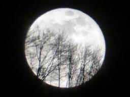 Webinar: Zum Vollmond: Im Heilungstempel des Mondes - unser psychisches Feld