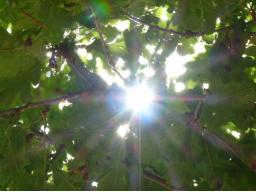 Webinar: Sommer - Sonne - Sonnenjahr - Stärkung durch die Sonnenkraft