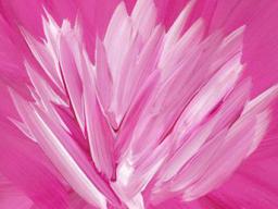 Webinar: Heile dein Herz mit Lady Rowena Teil 1 - Meditation