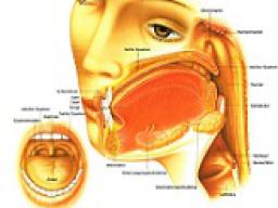 Webinar: Astromedizin 4.1.:Verdauungssystem - Mund bis Speiseröhre