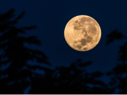 Webinar: Supermoon -  Zeremonie