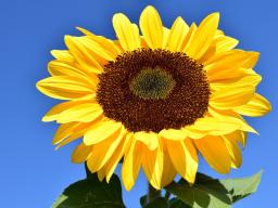 Webinar: Der verlorene Zwilling - die Sonne in mir