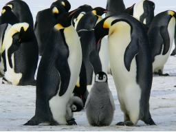 Webinar: Krafttierreise zur Selbstfindung/ der Pinguin