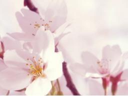 Webinar: Blick in deine Akasha Chronik (Einzelsitzung)