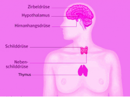 Webinar: Stärkung deines hormonellen Drüsensystems - Powerenergie