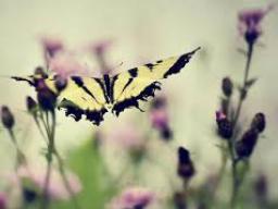 Webinar: Training für Sensitivität