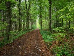 Webinar: Reinkarnationstherapie und Spirituelle Rückführungen