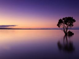 Webinar: Geführte Meditation - Stille