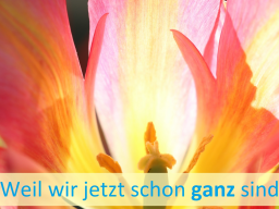 Webinar: Auf OPEN FOCUS - Reise