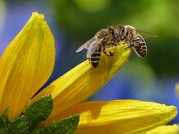 Webinar: Stärkung und Heilung der Bienen
