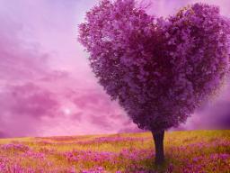 Webinar: Vortrag und Fragen zum Thema: Wie Du die Schönheit Deines Herzens lebst