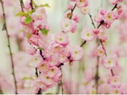 Webinar: Einhörner des rosafarbenen Lichtstrahls