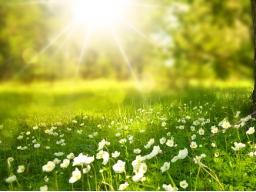 Webinar: Energieübertragung: Geborgenheit fühlen und Chakrenclearing