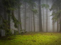 Webinar: Wise Woman Meditation