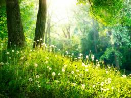 Webinar: Ausbildung und Einweihung zum spirituellen Berater