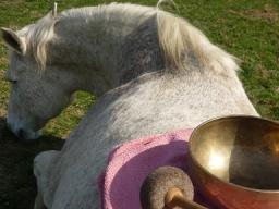 Webinar: Kostenlos!!! Entspannen mit Klangschalen für Mensch und Tier