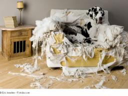 Webinar: Kurzweiliger Vortrag für Hunde-Menschen