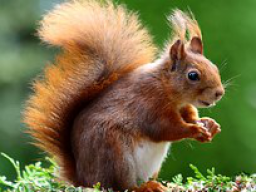 Webinar: Tierkommunikation