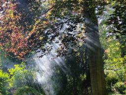Webinar: Die 9 Schlüssel der göttlichen Geheimnisse in Dir