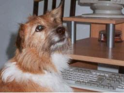 Webinar: Live-Tierkommunikation