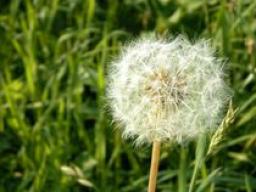Webinar: In Kontakt kommen mit deiner Seele - Atemmeditation