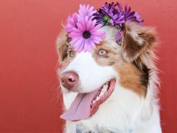 Webinar: Heilsitzung für dein Tier mit Erzengel Raphael