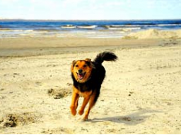Webinar: NEU* Unterstützung für Dich & Dein Haustier*