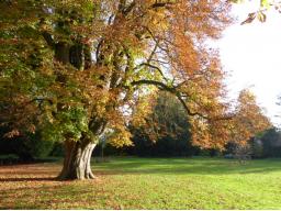 Webinar: Das Wesen der Bäume