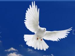 Webinar: Lebe deine göttliche Wahrheit