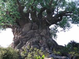 Webinar: Die Heilkraft der Bäume