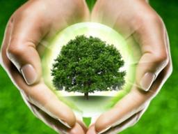 Webinar: Die Kraft der Gedanken  Wunscherfüllung und All-tag