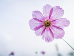 Webinar: Finde tiefer zu Dir - Transformation in einer Zeit des Umbruchs - 4.Teil -VortexHealing® Energy Healing