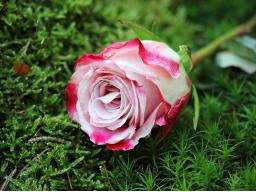 Webinar: Trauer in inneren Frieden wandeln - Lichtmeditation und Heilungsmantren