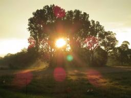 Webinar: Der Sonnenweg  - deine 7 Schritte ins Glück