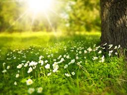 Webinar: Lebe dein Licht - Wiederholung
