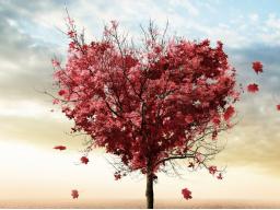 Webinar: Heile dein Herz mit der venusianischen Liebesenergie für mehr Selbstliebe