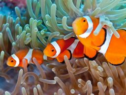 Webinar: Astrologie lernen * Der Fische Aszendent