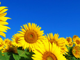 """Webinar: """"AKTION"""" Einzelcoaching / Entdecke die Sonnen-Seiten des Lebens"""