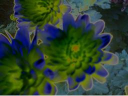 Webinar: Spagyrische Pflanzenmagie/welches Lebensthema zeigt mir mein Wohnort