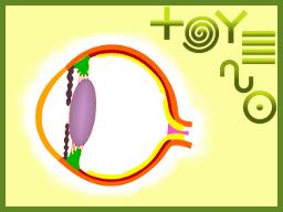 Webinar: Augenharmonisierung mit PraNeoHom®