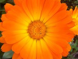 Webinar: Goldene Energie für Mutter Erde
