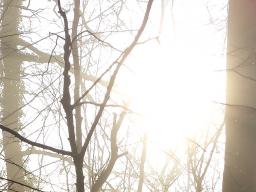 Webinar: Geführte Meditation - Stärkung und Schutz bei Fremdenergien
