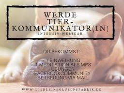 Webinar: Werde Tierkommunikator(in) - Tierkommunikation leicht gemacht