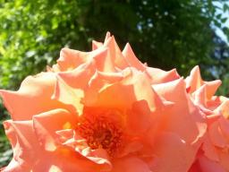 Webinar: Kostenloser Einzeltermin- Blick in Gedanken und Gefühle des Lieblingsmenschen