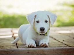 Webinar: Gesundheit und Regeneration für dein Tier - Basis