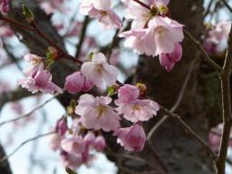 Webinar: Hildegard von Bingen: Wiedergeburt und Verjüngung mit der Frühlingskraft